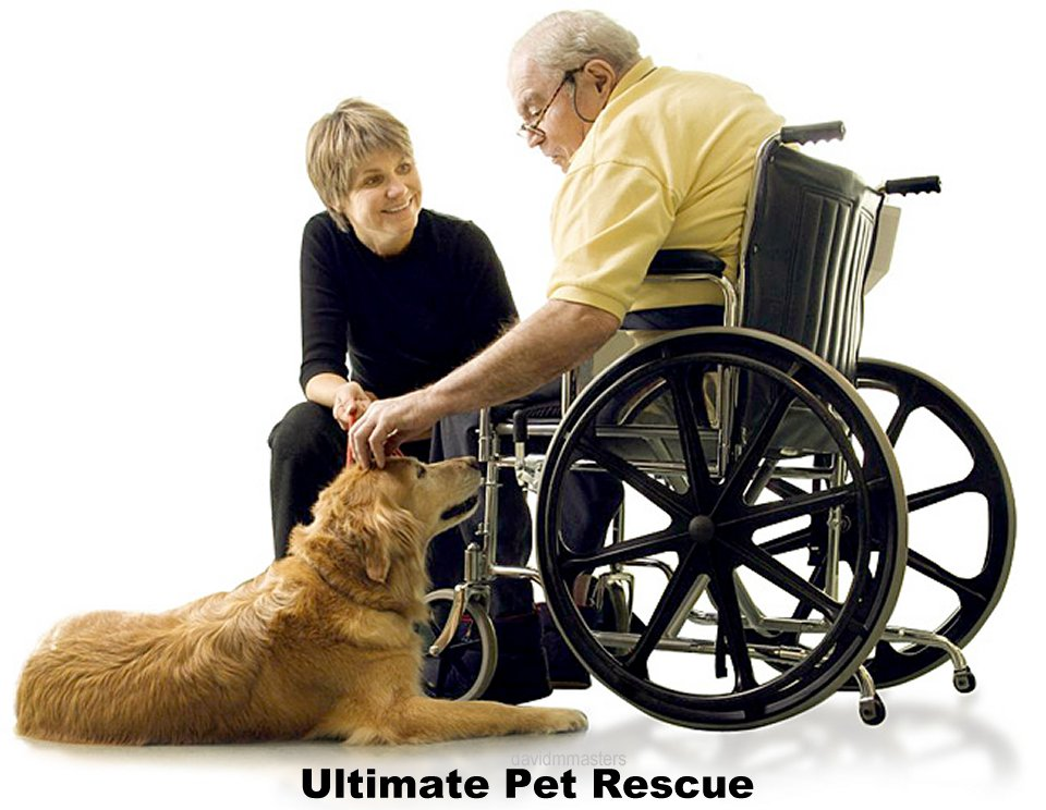 Ultimate pet rescue matching at risk dogs and cats with pet parents in need