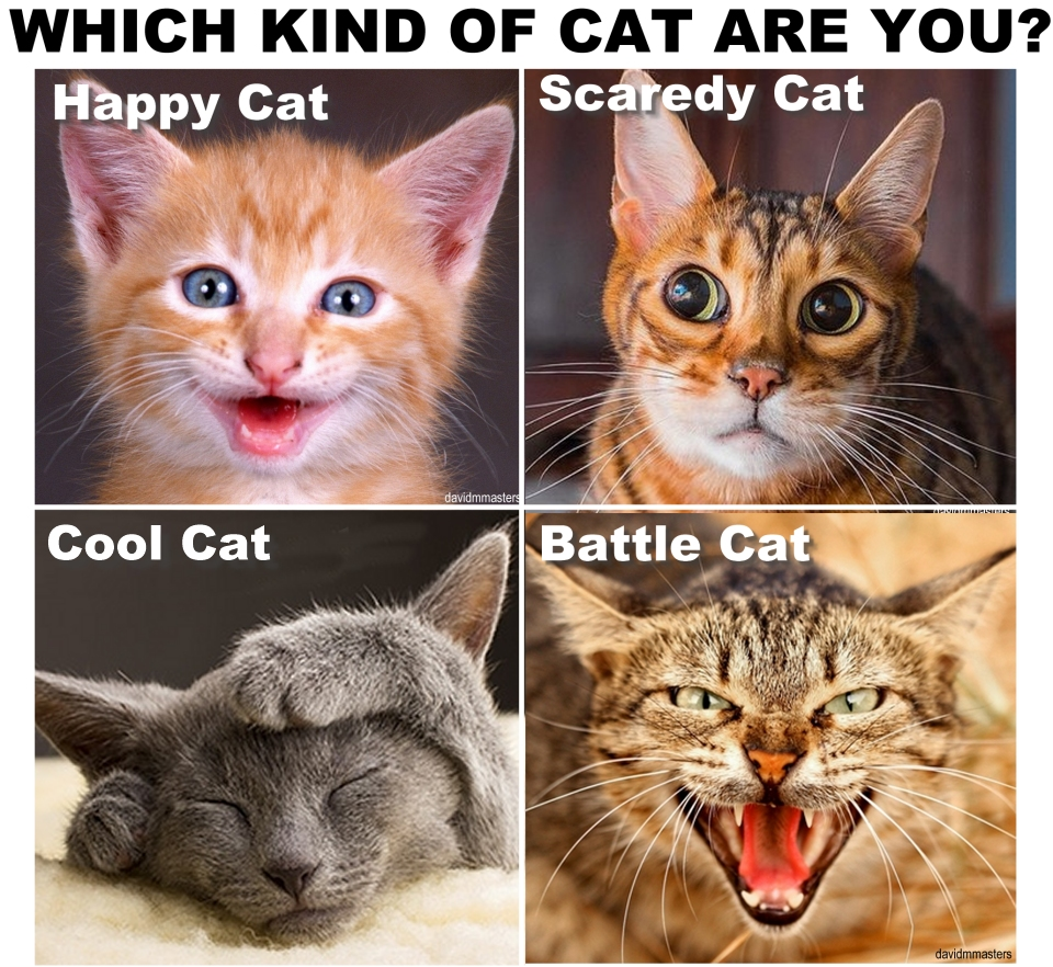 Which kind of cat are you cat personalities purr sonality